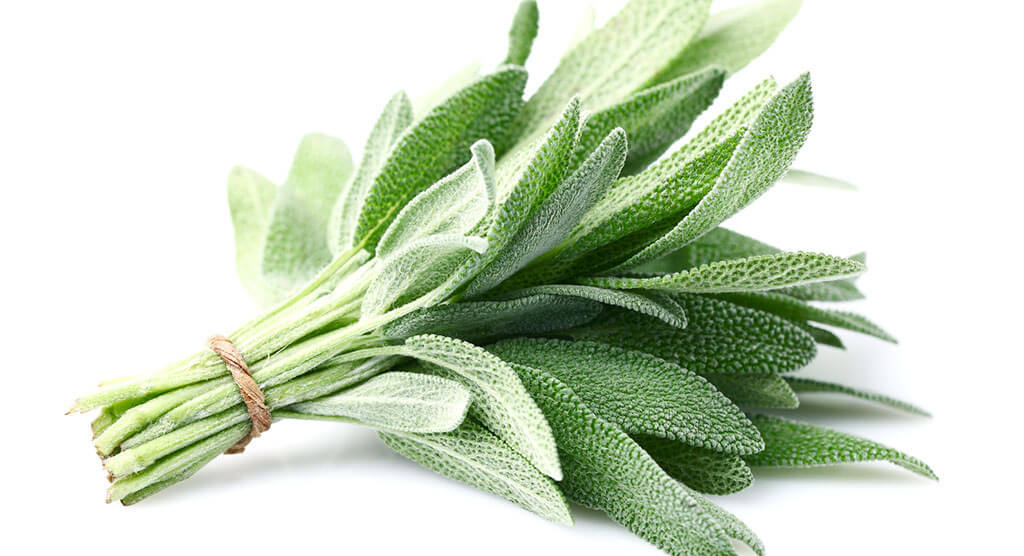 The Best Substitutes For Sage Spice